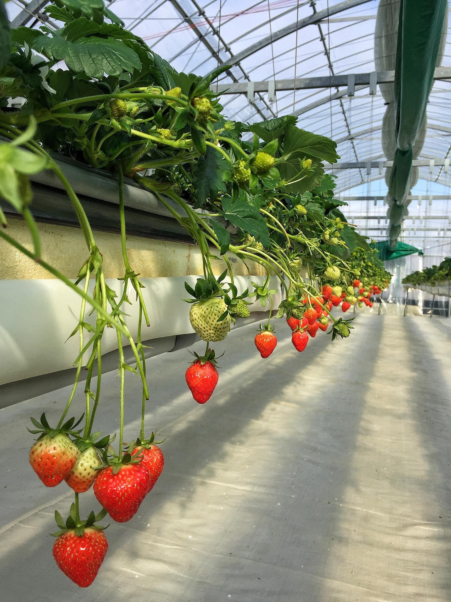 Seasonal Fruit Picking
